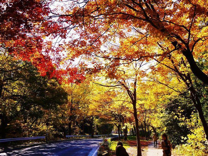 紅葉に染まる「円山公園」の歩き方