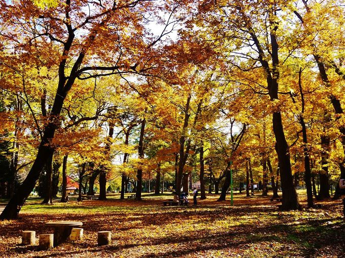 「円山公園」に広がる落ち葉の絨毯の上を駆け回ろう!