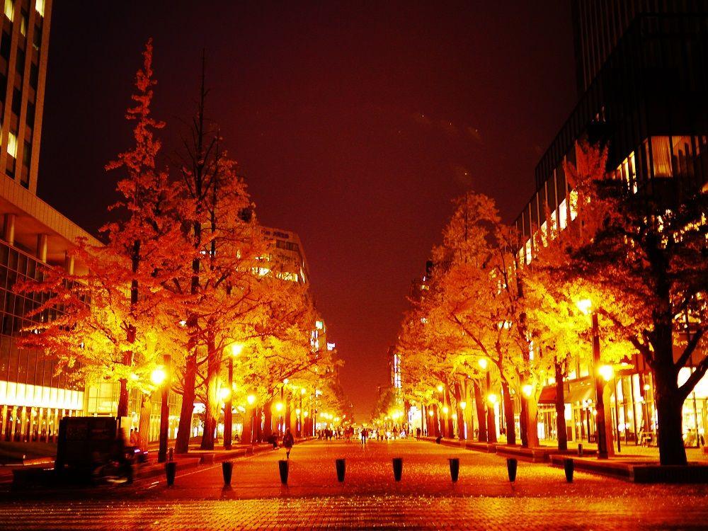 黄金に輝く銀杏紅葉!秋の北海道庁旧本庁舎(赤れんが庁舎)