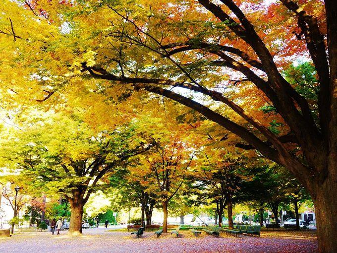 秋の「大通公園」は札幌市中心部オススメの紅葉狩りスポット!