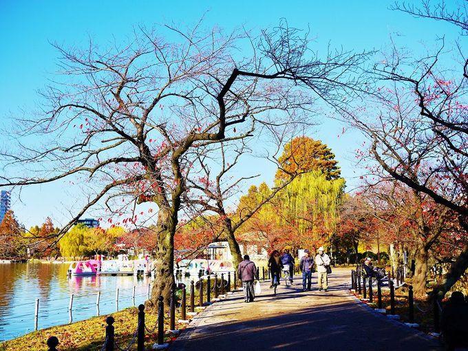 「上野恩賜公園・不忍池」は紅葉散歩やスワンボートが楽しい!