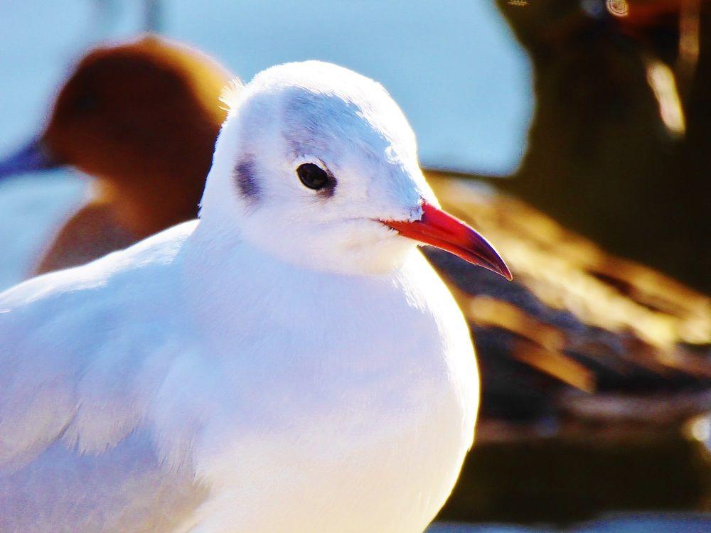 東京都の鳥「ユリカモメ」舞う上野恩賜公園・不忍池