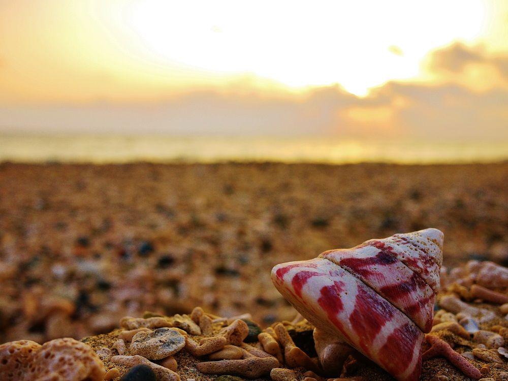 隠れ家的ビーチだから、大きな貝殻も拾えるかも?!
