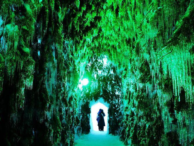 ブルーだけじゃない!美しいグリーンの世界「苔の洞門」