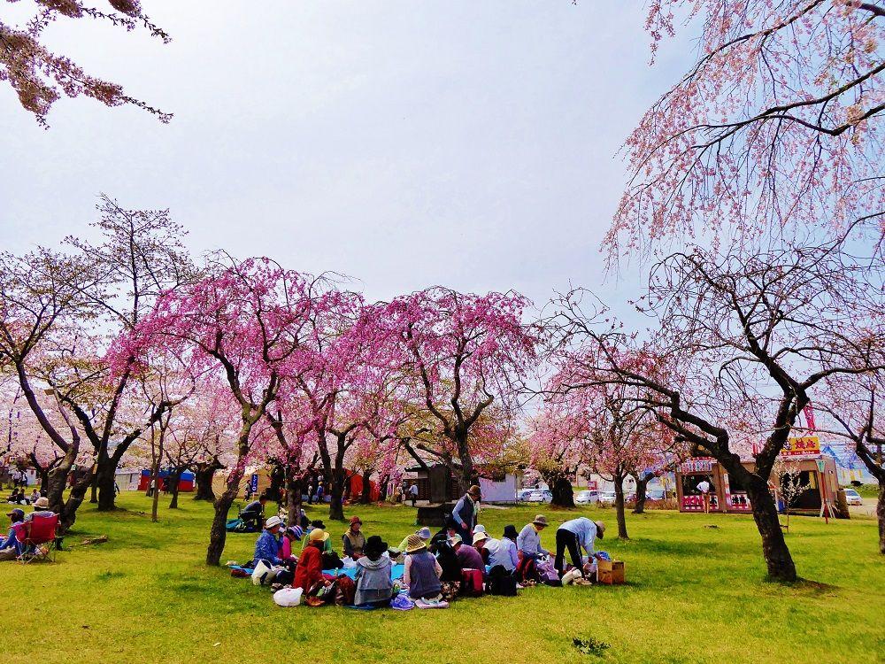 ソメイヨシノだけじゃない!園内を彩る桜たち