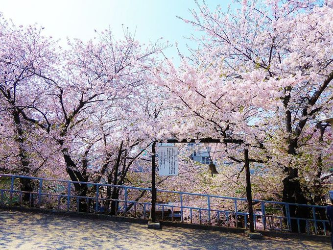 桜を背景に歴史に触れる!昔、発車の合図に実際に使われていた鐘