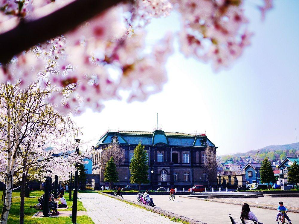 小樽運河散策の途中で立ち寄りたい!歴史と桜の「運河公園」