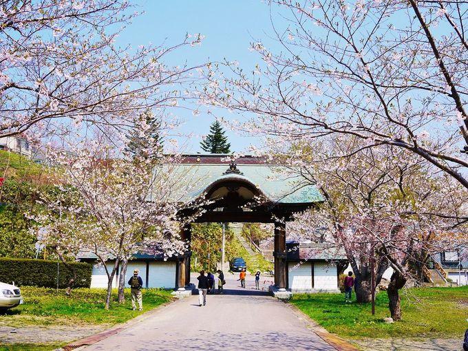 歴史ある境内でお花見!桜咲く「天上寺&水天宮」