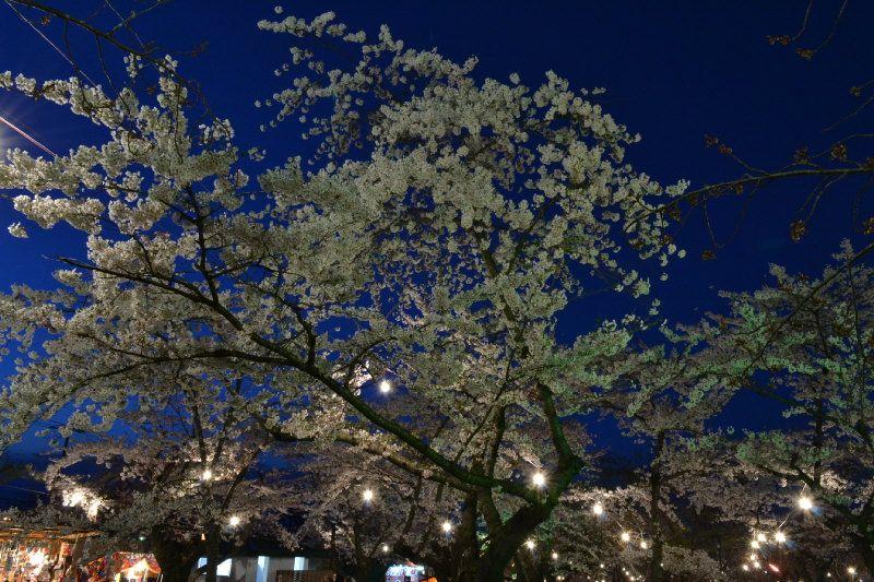 幻想的な夜桜も楽しめる!
