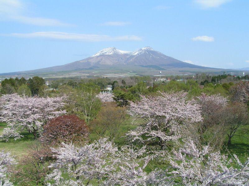 桜と一緒に望む秀峰駒ケ岳の展望!「オニウシ公園」