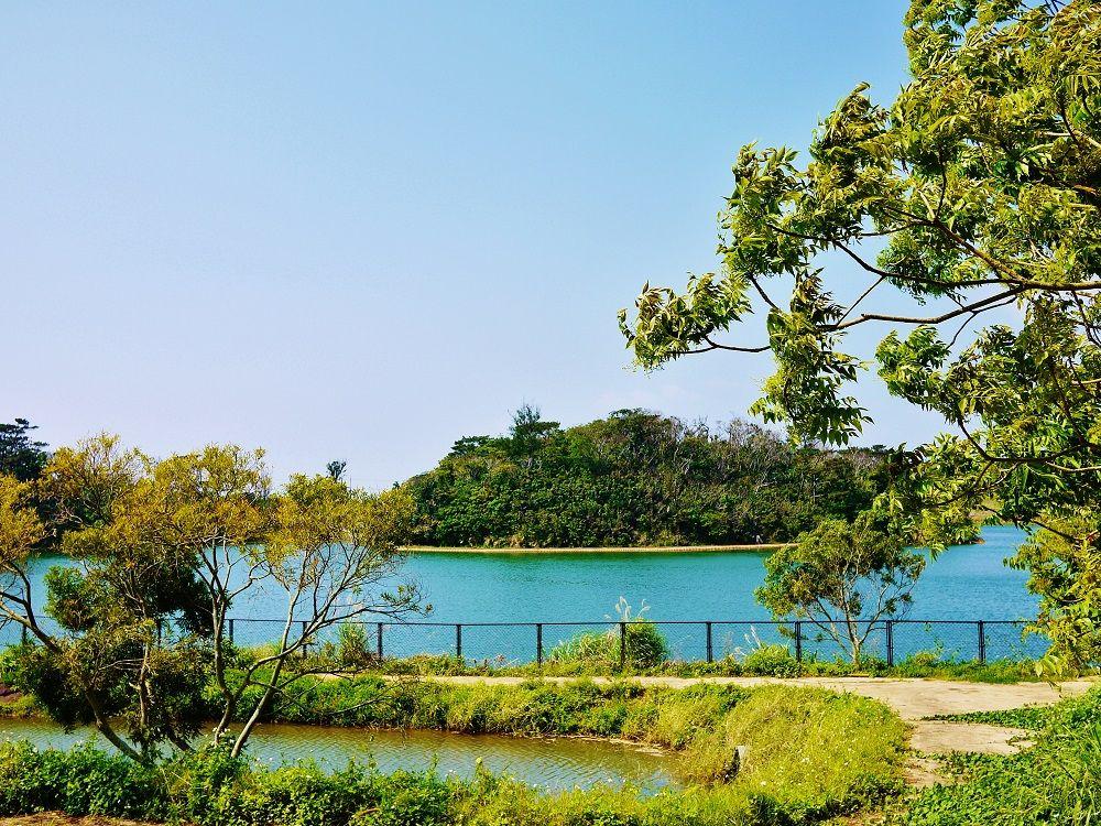自然豊かな五枝の松園地はクメジマボタルの生息地