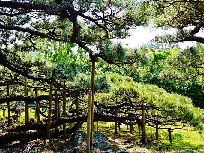 自然の造形美!大地を這うように伸びる美しい枝