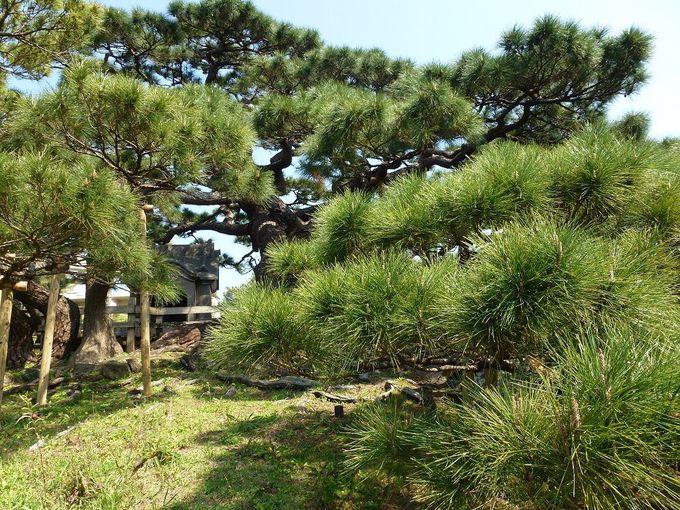 松の歴史に触れる小さな社「土帝君」