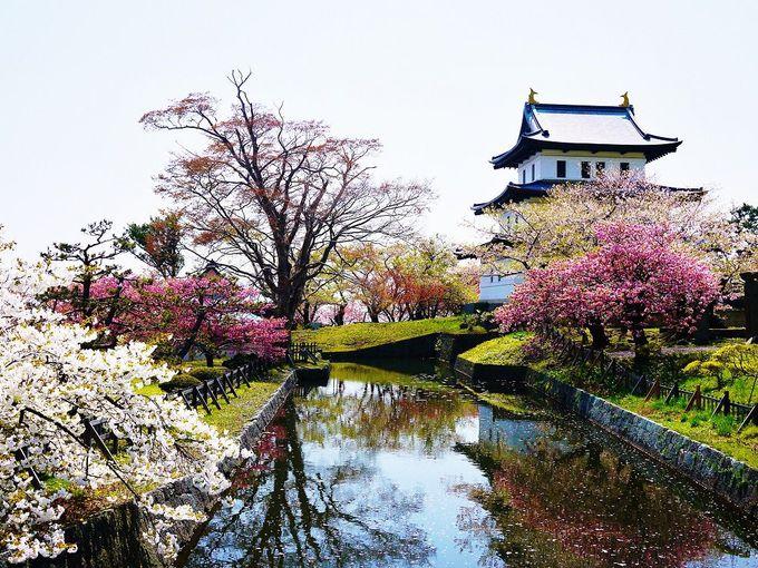 絶景のオンパレード!日本を代表する桜の名所「松前公園」