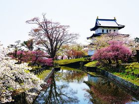 北海道新幹線で話題!桜舞う道南地方のお花見スポット5選