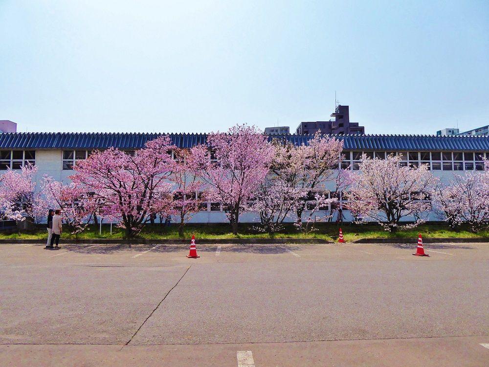 お花見は春色のグラデーションを楽しんで!