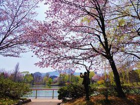 GWは桜色に染まる北の大地へ!札幌市お花見スポット5選
