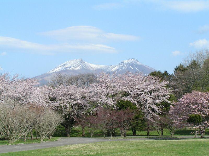 桜と秀峰駒ケ岳の絶景スポット!森町「オニウシ公園」