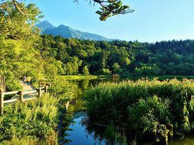 水と緑の大自然に感動!北海道「利尻島」観光スポット5選