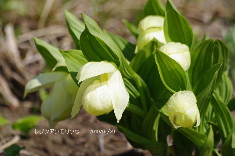絶景と高山植物の宝庫!北海道「礼文島」観光スポット5選