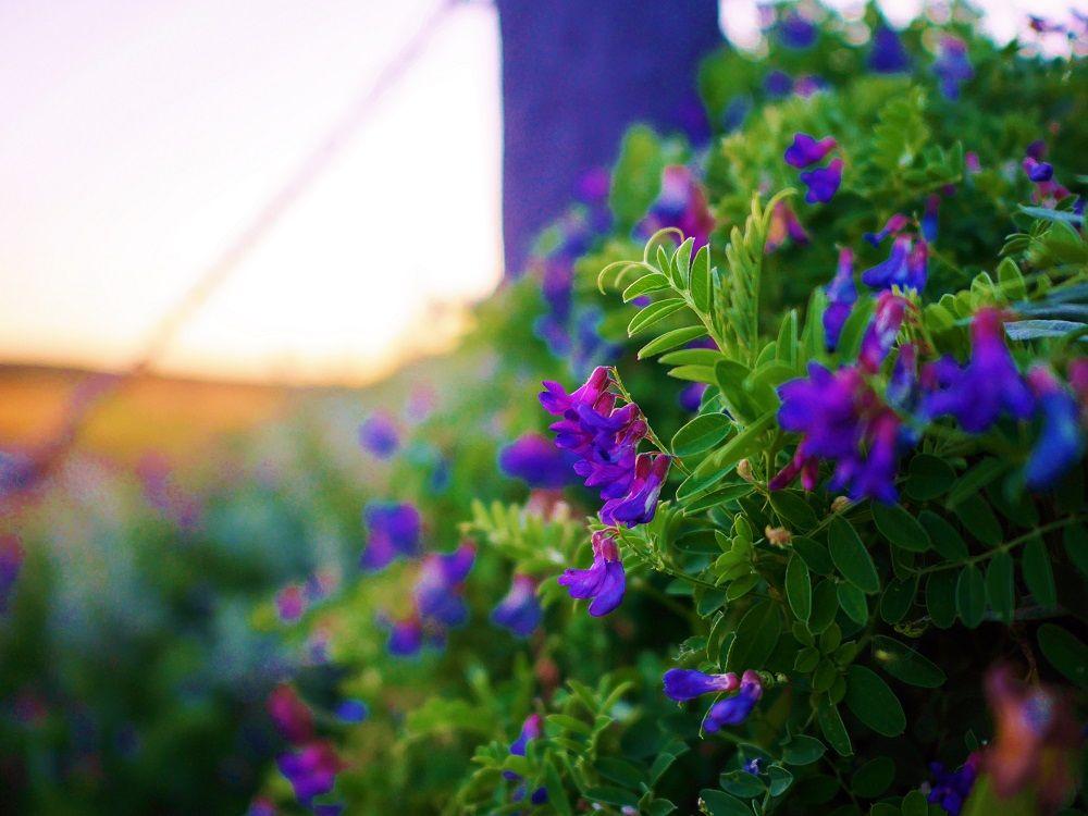 展望台まで約15分!絶景を求めて花々が彩る階段を登ろう