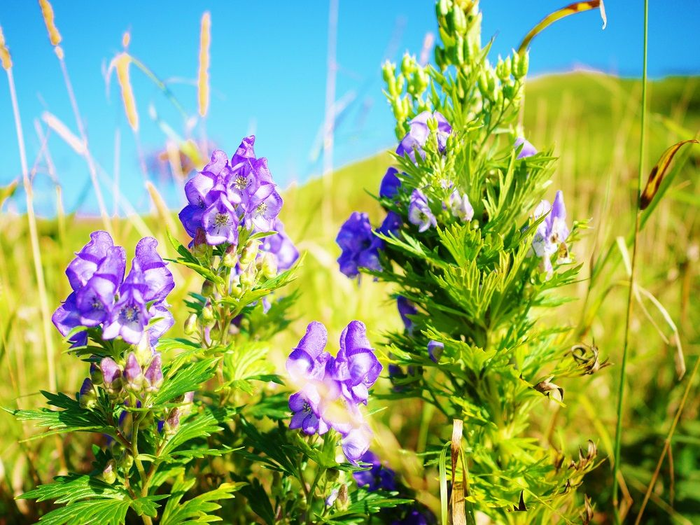 美しい花には毒がある…かも?固有種も咲く自然歩道