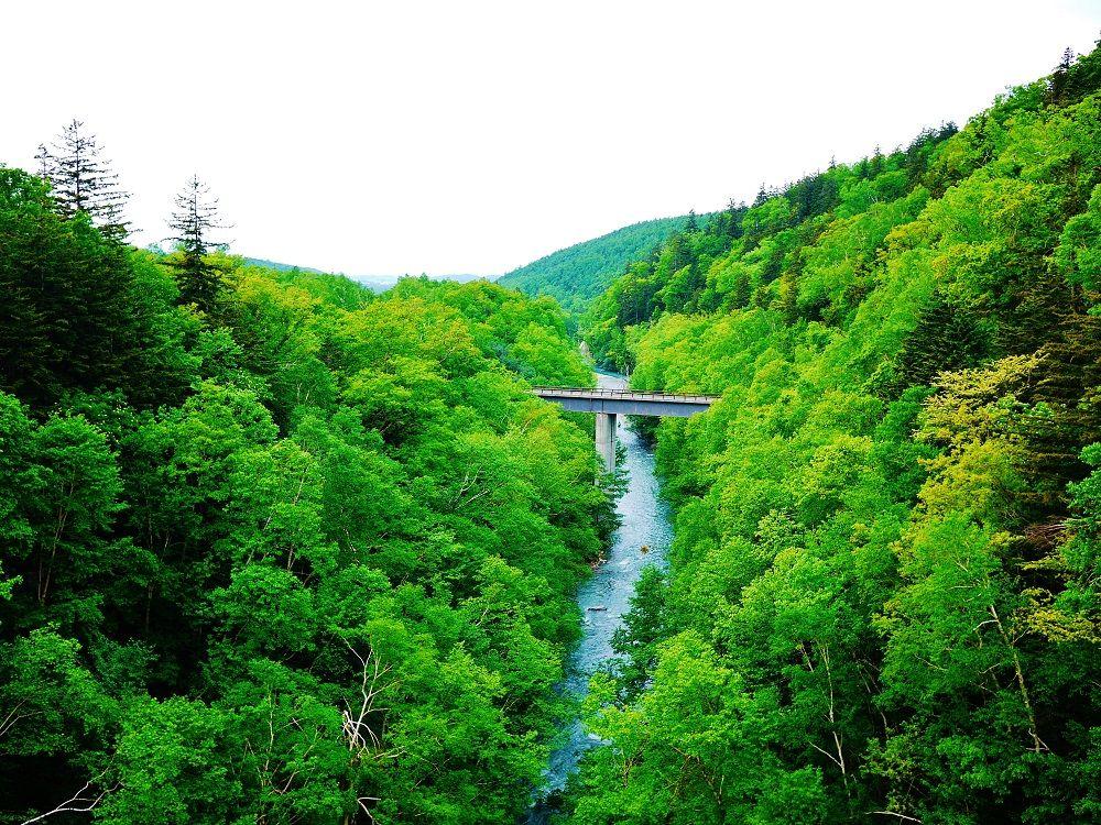 橋の反対側には深い森と渓谷を流れる美瑛川の風景