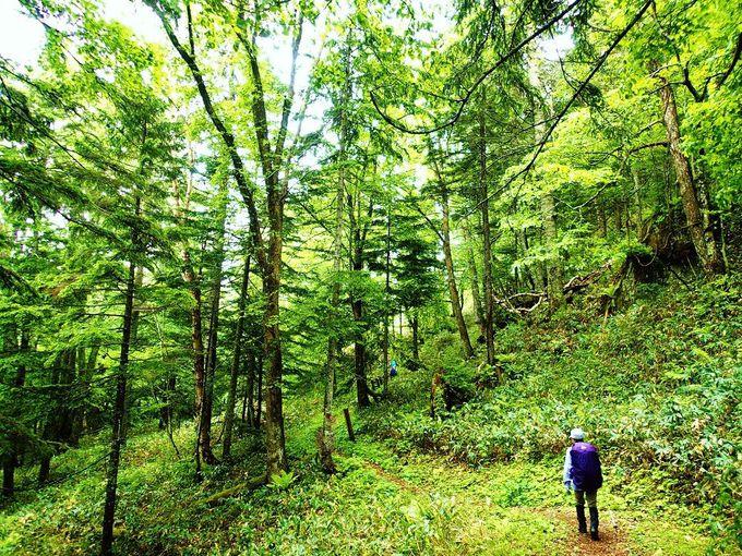 緑の森の中を歩く