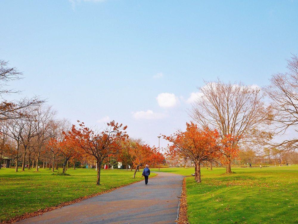北海道を代表するフラワーパーク「百合が原公園」の秋景色