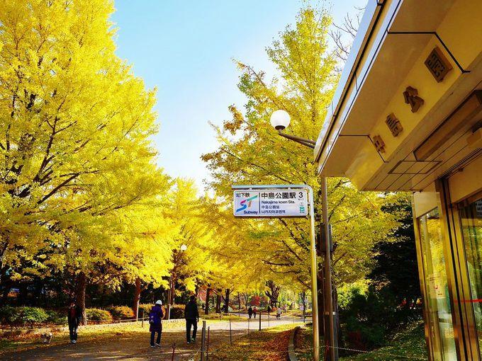 地下鉄を降りたら…目の前に広がる黄金のイチョウ並木
