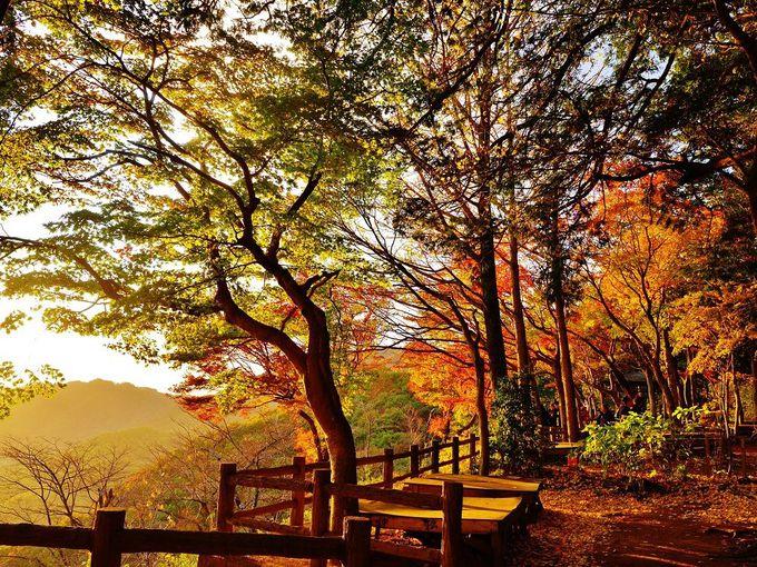 栃木県で過ごす秋の1日。絶景も楽しめる「謙信平」へ行こう