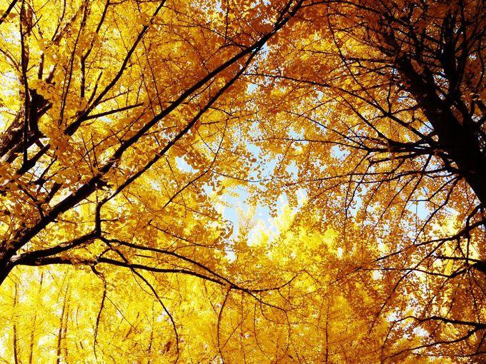 見上げると優しい日差し降り注ぐ黄金の空