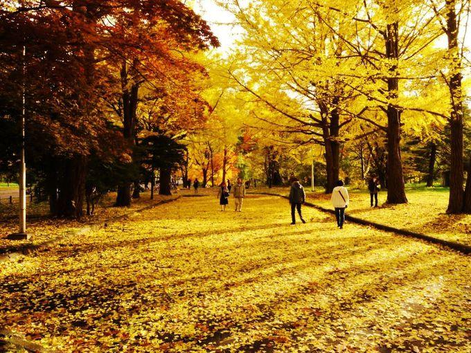 西日でキラキラ輝く黄金の広場も必見