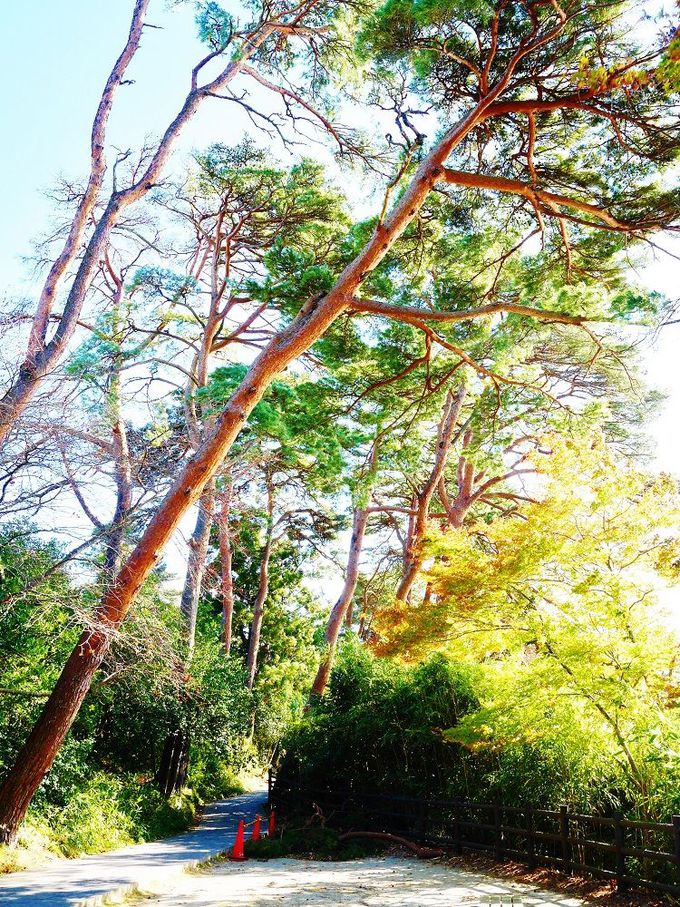 日本三景の風景を眺めながら自然豊かな島内を探検