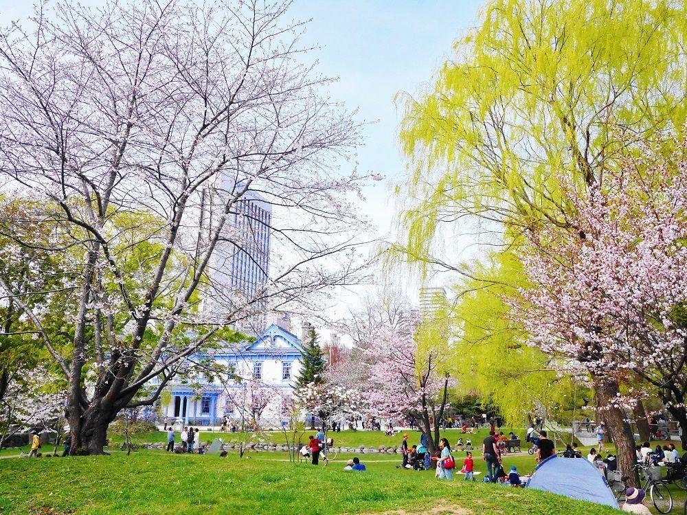 絵になる共演…ウルトラマリンブルーの豊平館と桜