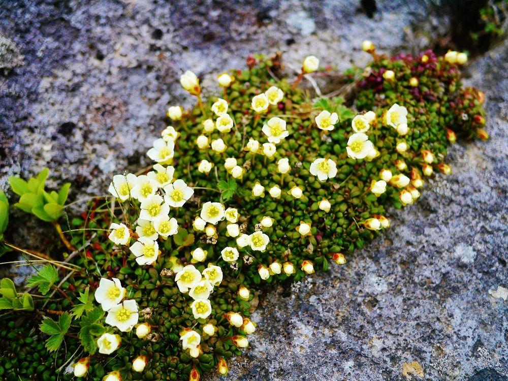 夏は高山植物が咲き乱れる美しい山
