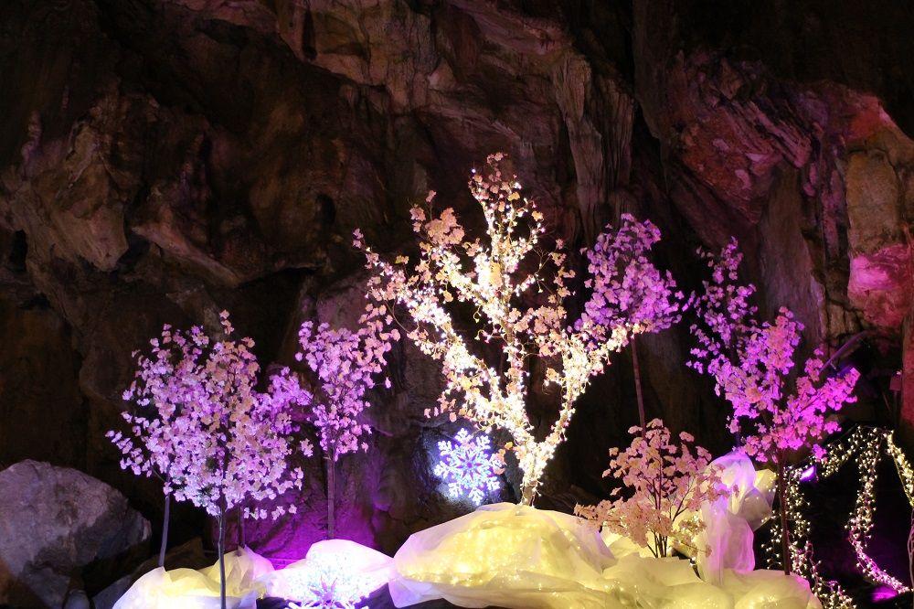 イルミネーションイベント「緋桜物語」で一足早いお花見を
