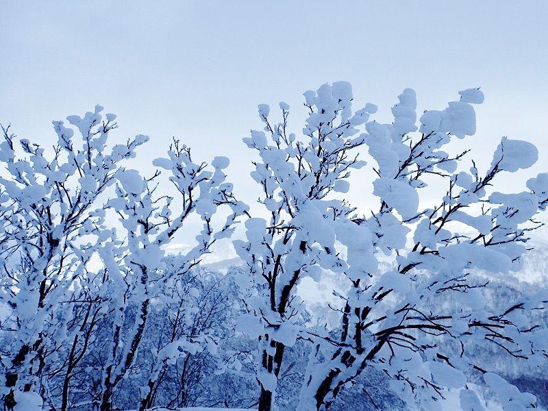 美比内山登山の基本情報