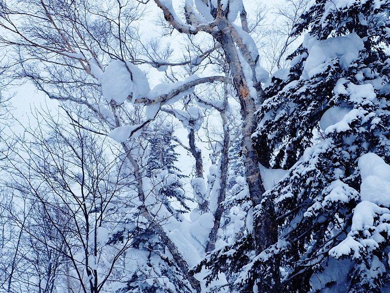 モノトーンの世界が広がる幻想的な登山道