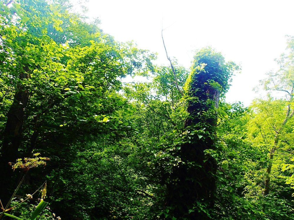 自然を観察しながら進む登山道