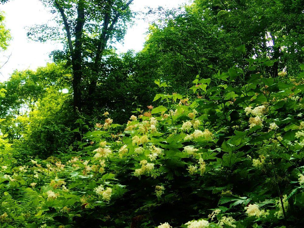 登山道を彩る野の花に癒される