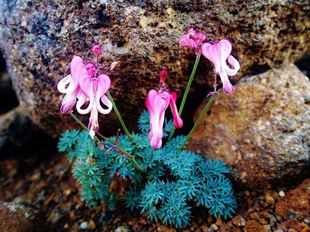 高山植物も咲き乱れる山頂までの道のり
