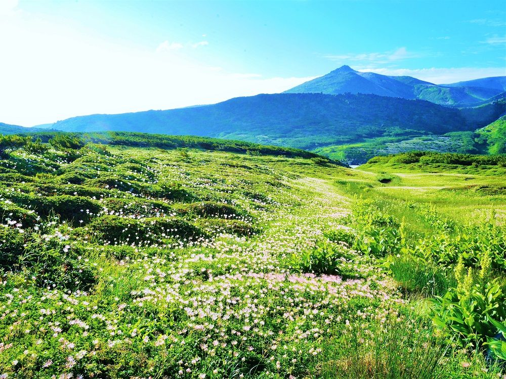 目の前に広がる大自然!変化に富んだ登山道の風景