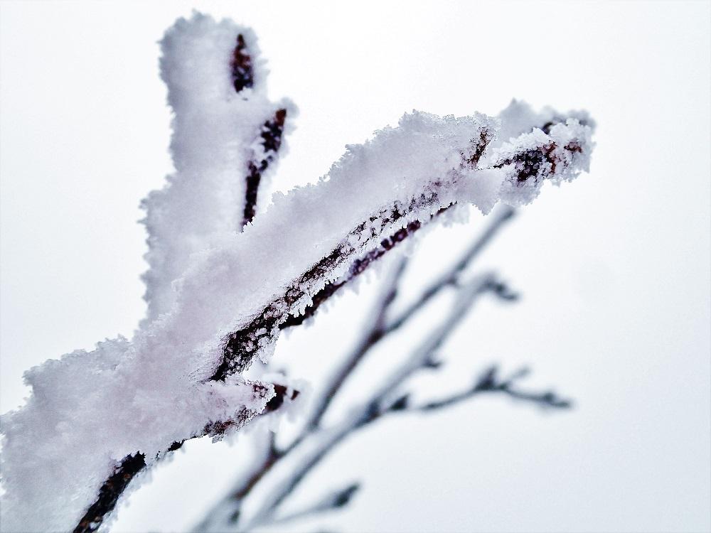 冬限定!樹氷の美しき風景