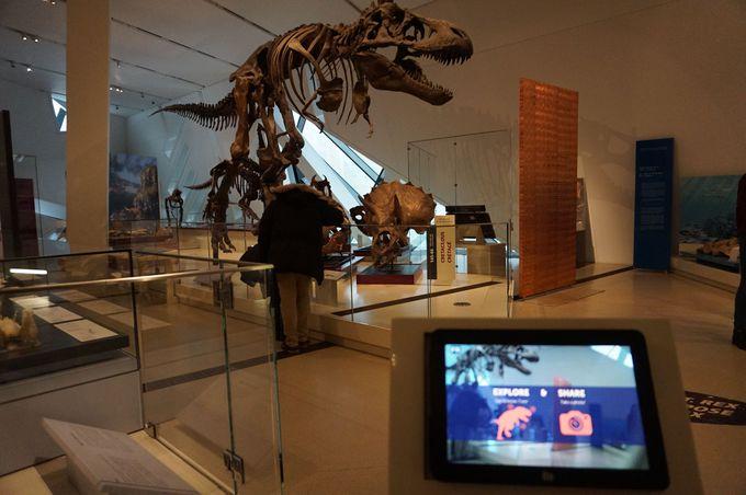 古代エジプトから恐竜まで?幅広い展示