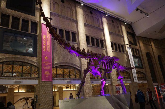 外観も内装も素敵な博物館!