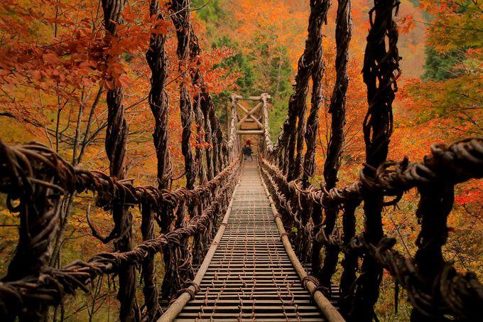 1日目午後:紅葉に包まれる「奥祖谷二重かずら橋」へ行こう