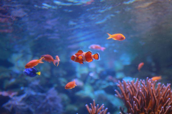 2日目午前:見応えある海中生物の楽園「鳥羽水族館」を満喫