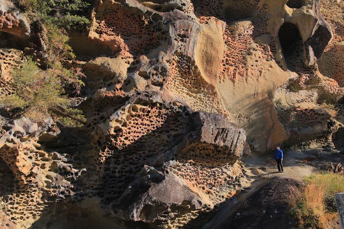 まるで巨大な蜂の巣!いびつな要塞「虫喰岩」