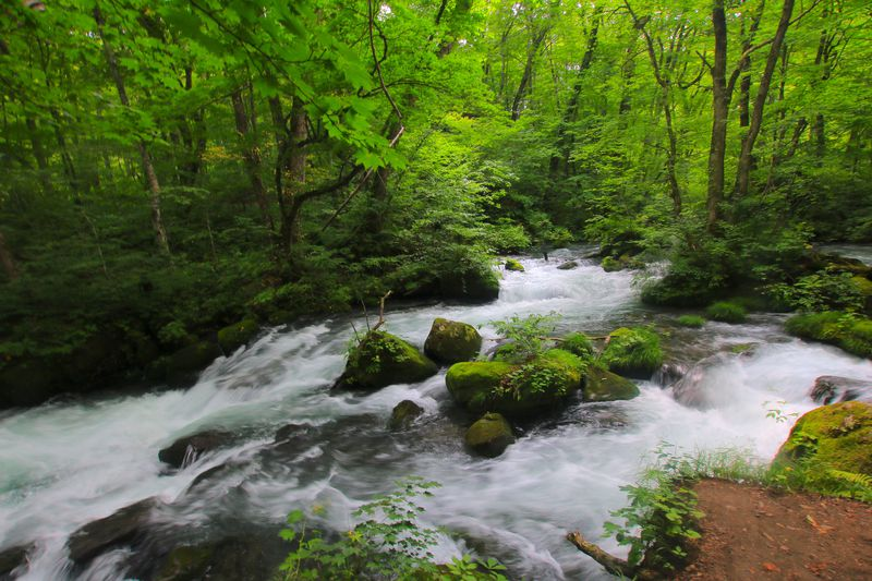 緑溢れる渓流や絶品グルメ!五感で奥入瀬・十和田湖を満喫